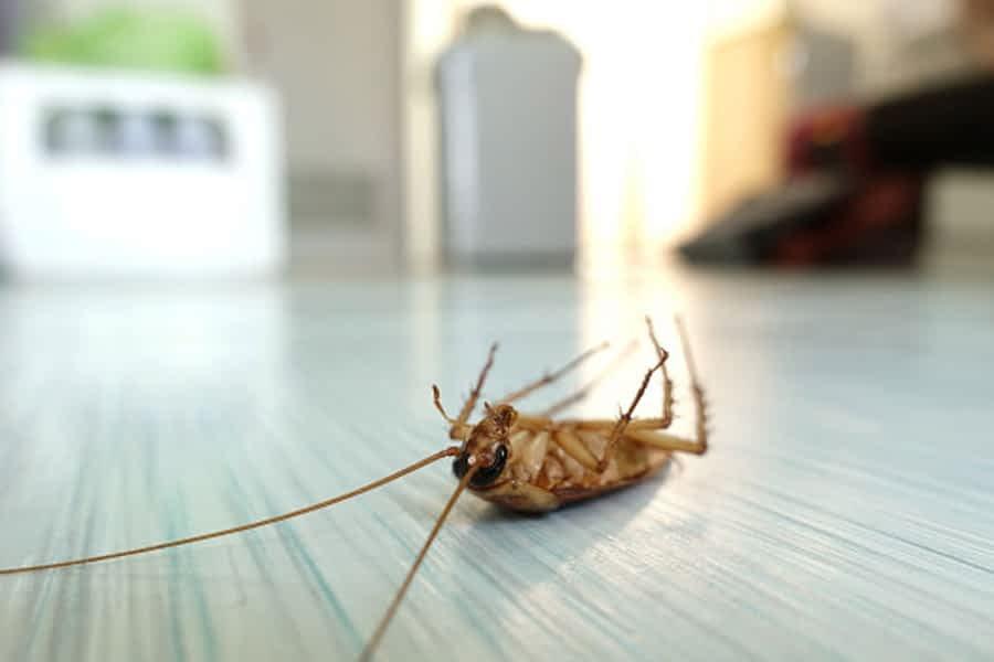 Cockroach Control Services in Karachi